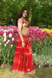 Meghana Photo Gallery