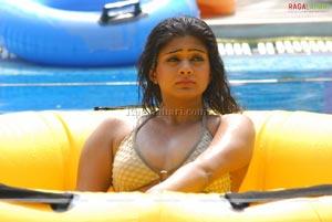 Priyamani Bikini Photo Gallery