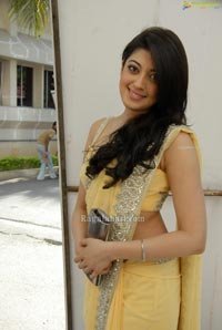 Pranitha in Sleeveless Saree Blouse